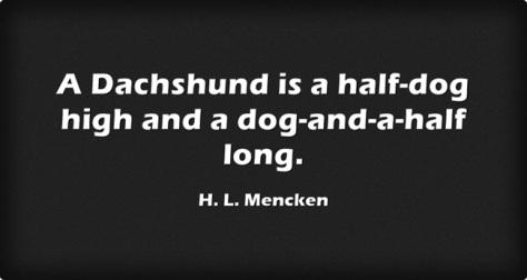 A-Dachshund-is-a-halfdog